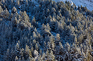 Snowed trees in Aragnouet, Hautes-Pyrenees, Occitanie, France