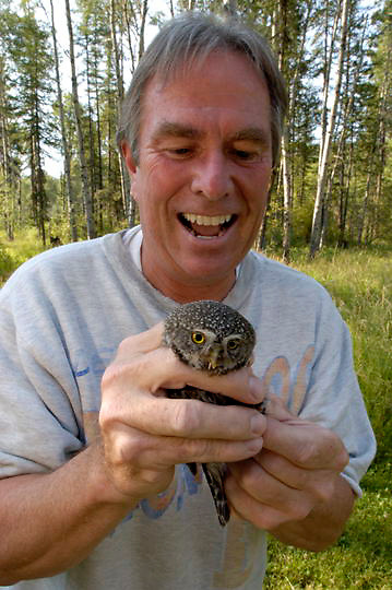 Northern Pygmy Owl (Glaucidium gnoma) Montana. Property owner, Bill Bennington holds adult that is being researched by Denver Holt, a biologist from The Owl Research Institute in Charlo, Montana.