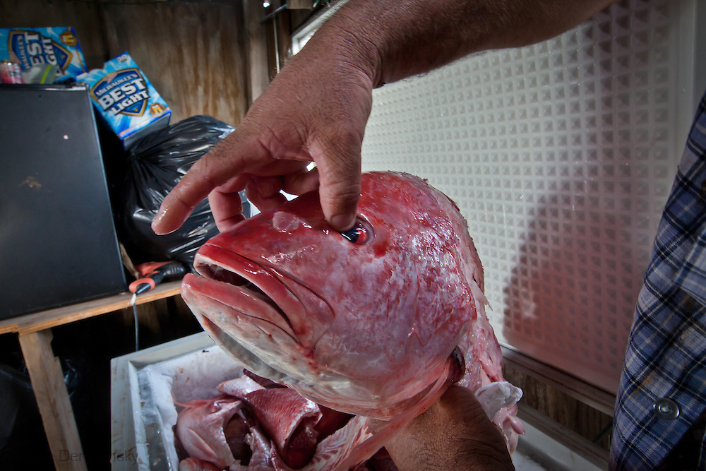 Dardar holds the head of a freshly caught red snapper from a deep sea fishing trip into the Gulf of Mexico on Isle de JeanCharles.