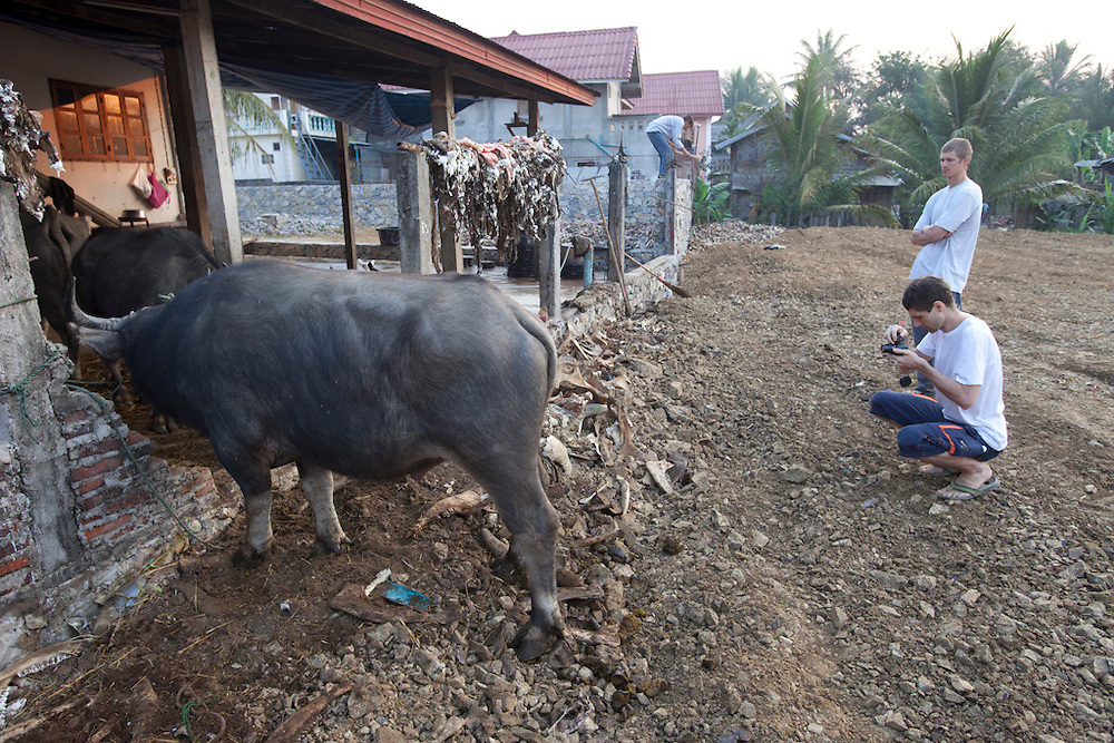 .Animal slaughter and rendering area behind Phousy public market in Ban Saylom Village, just south of Luang Prabang, Laos.