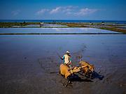 31 JULY 2017 - MENDOYO, JEMBRANA, BALI, INDONESIA: Farmers use buffalo and oxen to till a rice field in Bali.     PHOTO BY JACK KURTZ