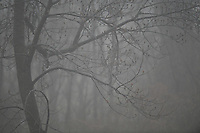 Foggy Winter Morning. Image taken with a Nikon D5 camera and 600 mm f/4 VR lens (ISO 3200, 600 mm, f/4, 1/400 sec).