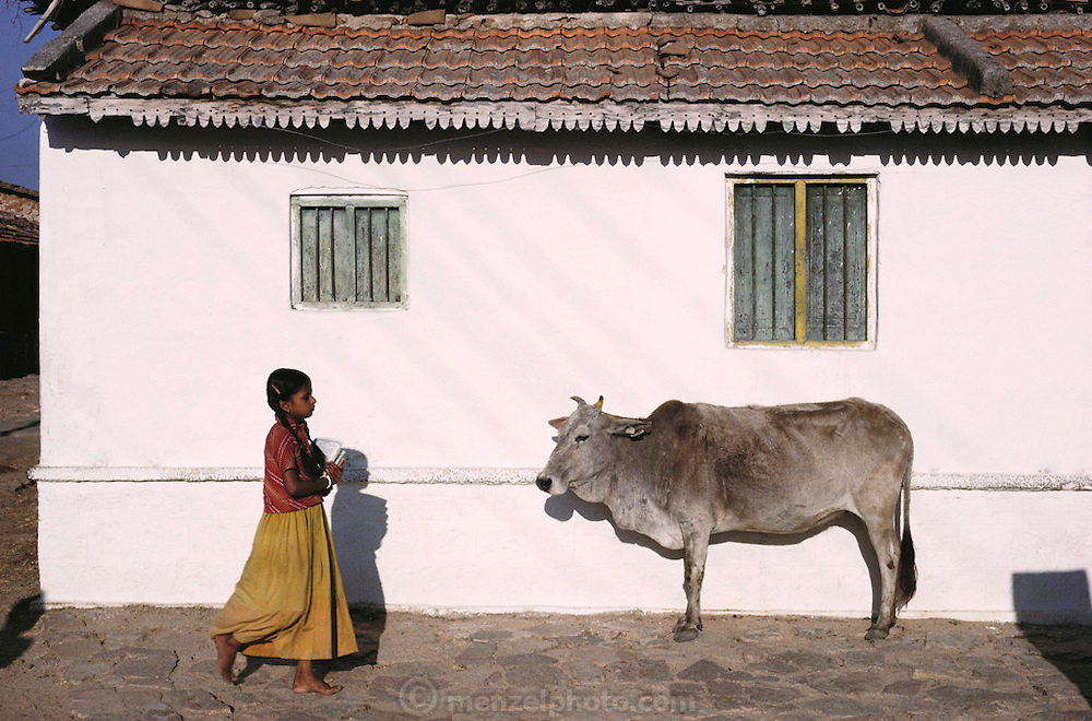 Schoolgirl and cow. Mysore, South India.