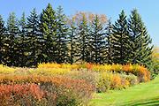 Agriculture Canada Research Station. PFRA Prairie Farm Rehabilitation <br /> Indian Head<br /> Saskatchewan<br /> Canada