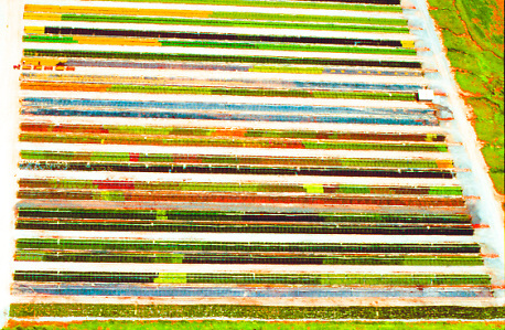 Aerial view of Flower Nursery, Flower Palette Aerial views of artistic patterns in the earth.