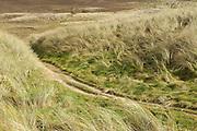 Perranporth Dunes