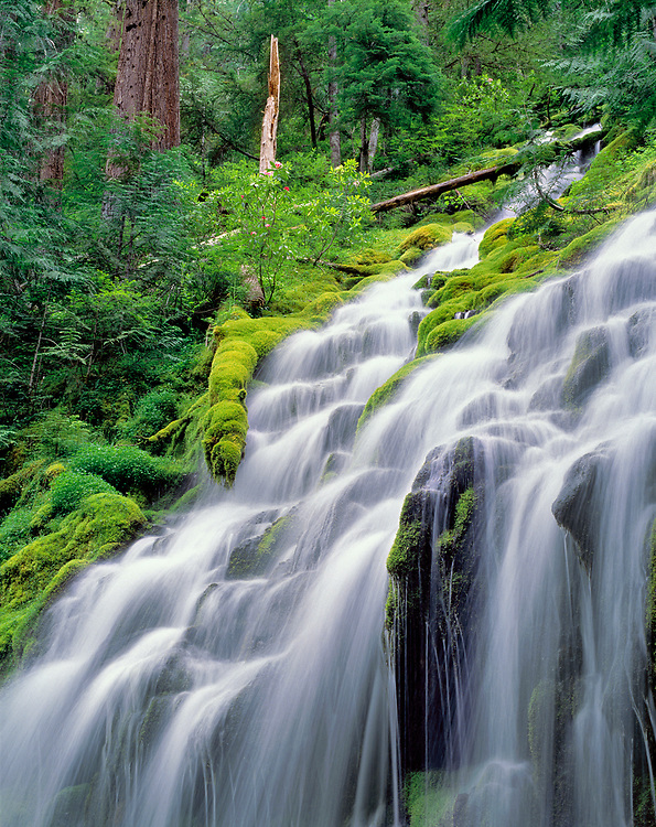 Upper Proxy Falls cascades down a lush, rhododendron-filled slope in Oregon's Willamette National Forest.