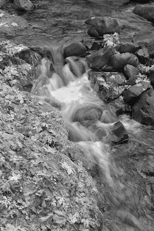 Sweet Creek Lower Cascade Falls - Mapleton, Oregon - Infrared Black & White