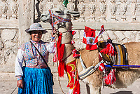 Chivay, Peru - July 29, 2013: Llama with peruvian flags and woman in the peruvian Andes at Arequipa Peru on july 29th, 2013