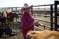 Brunette Downs Cattle Station is situated on the Barkley tablelands in Australia's Northern Territory. One of Australia's largest cattle stations..Will Luff drafting cattle.