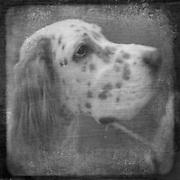 BENJAMIN KRAIN 6-22-08<br /> Arkansas Kennel Club All Breed Dog Show