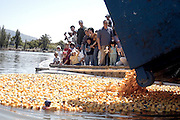Fremont, CA. - 4/24/04 - Families watch the 10th annual Ducks for Bucks race at Fremont's Lake Elizabeth.