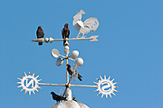 A group of pigeons on top of  arrows that point to  the direction of the wind .