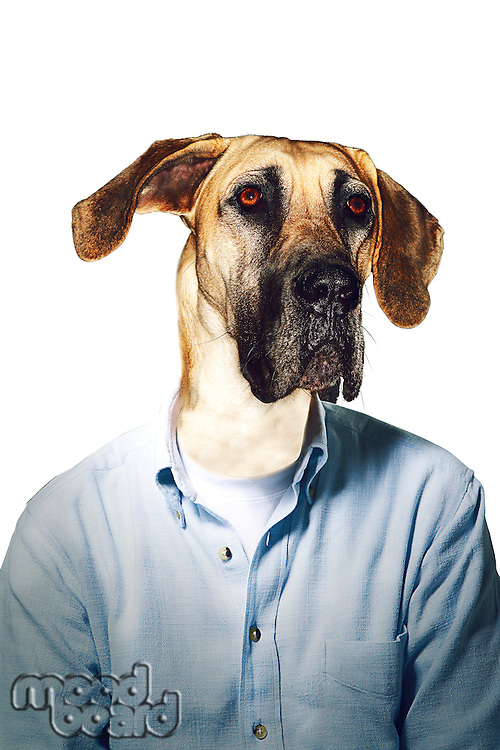 Grumpy dog's head on businessman body