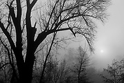 Trees, sun, and fog, El Dorado County, California