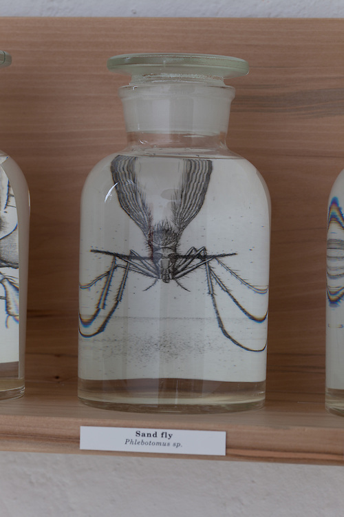 Wicket Bugs, Briony Morrow-Cribbs, Etching, glass bottle, water and wood shelf.