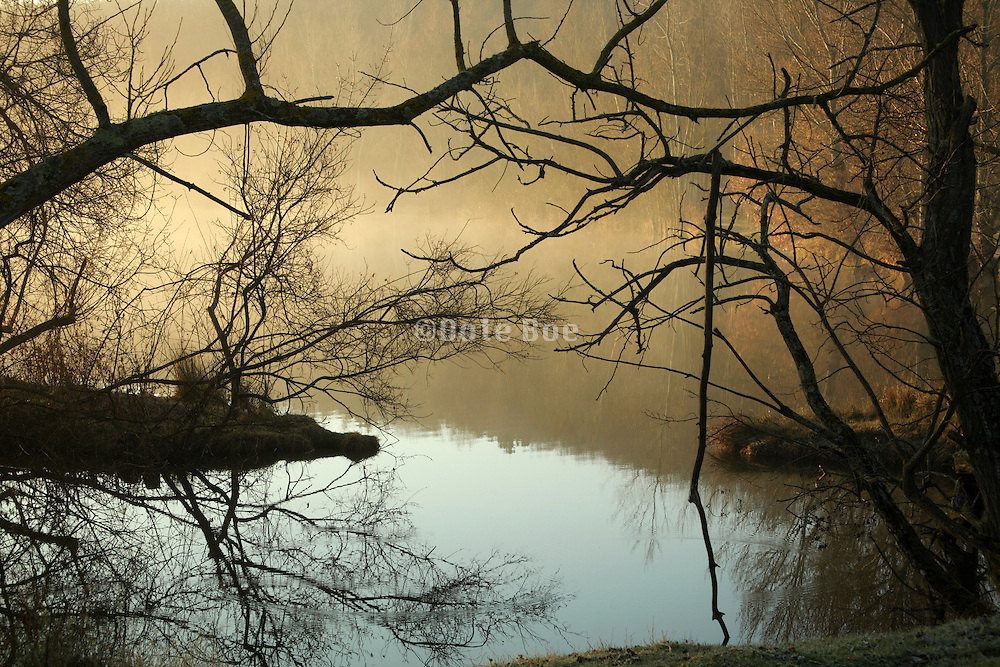 detail of fog with trees by a lake