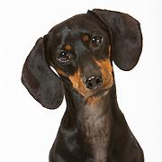 20140807 Erin Dogs