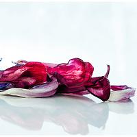 Dried flowers still keep the color, and the structure of the flower is even more visual now.<br /> <br /> T&oslash;rkede blomster beholder fargen,og strukturen blir enda mer tydelig.