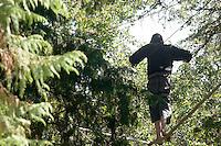 Tree-Sitter in Memorial Oak Grove, UC Berkeley, California