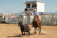 Wilsall Ranch Rodeo, Montana, Ranch Horse Competition, Jaime Wood, The Inlaws and Outlaws Team, MODEL RELEASED, PROPERTY RELEASED horse & rider