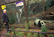 Former British Prime Minister Edward Heath greets the Chinese Panda Ming Ming at London Zoo, on loan from the Chinese government as part of a breeding programme, on 22nd October 1991, in London, England. Edward Heath met with Premier Li Peng and agreed to loan a female panda to London Zoo for an international breeding project. But London Zoo's male panda Chia Chia unfortunately died in the week before her arrival and the other male, Bao Bao, and Ming Ming didn't get on and on the first day that both pandas were in the same enclosure, it all went wrong when the play-fight that normally precedes the mating process with pandas turned nasty and Ming Ming was badly injured. She lost part of an ear, had two infections and needed surgery and antibiotics. The risks were too great to put them together again and they performed artificial insemination on Ming Ming in 1992 and 1993 but it didn't work. Ming Ming, the world's oldest panda died on the morning of May 7, 2011 at the age of approximately 34.