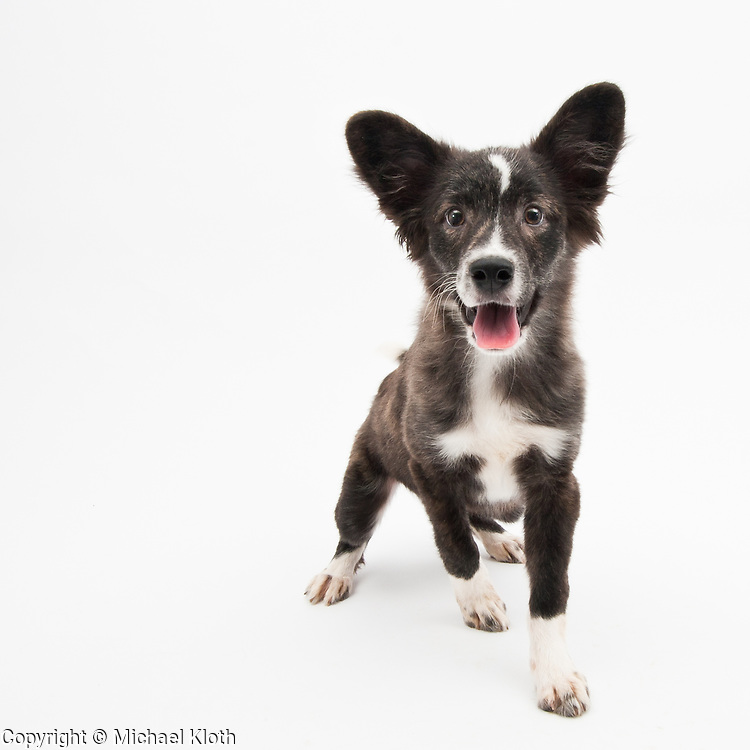 This one dates back to my Kentucky years and was photographed at the Woodford Humane Society (well, I probably brought the puppy and his sibling home to make the photographs).  A great example of puppy attitude.