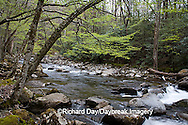66745-038.01 Middle Prong of the Little River in spring, Tremont Area, Great Smoky Mountain National Park, TN