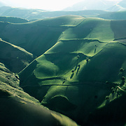 20 May 1976<br /> Very rounded green hills. Sparse, single pistachio trees.