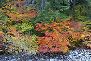 Fall Color #5 - Ross Lake National Recreation Area