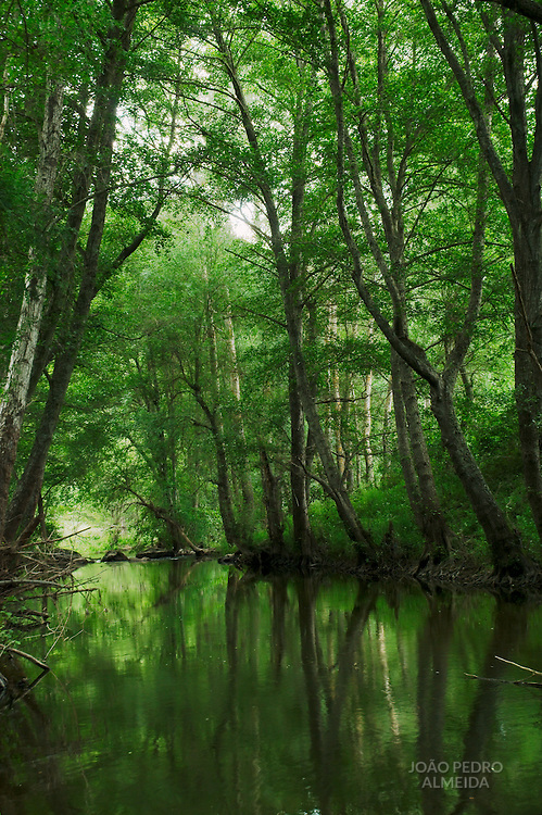Trees by Angueira River