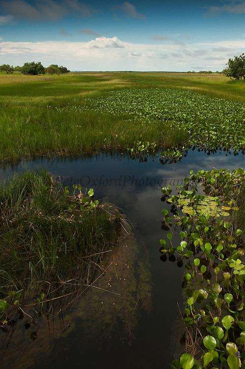 Permanent ponds in Savannah<br /> Rupununi<br /> GUYANA<br /> South America