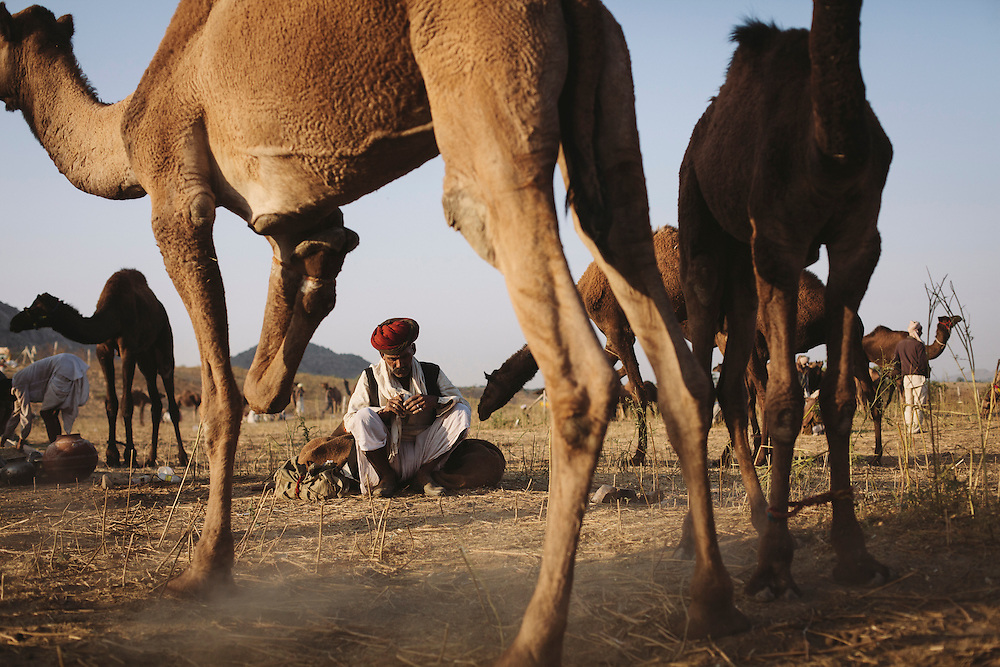 A camel trader in Pushkar, Rajasthan, India.