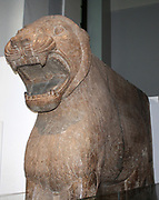 Colossal Guardian Lion. Assyrian, about 865-860 BC. From Nimrud, Temple of Ishtar, Sharratniphi.This 15 tonne lion symbolized Ishtar, the Assyrian goddess of warm and guarded the entrance to her temple. The cuneiform inscription gives the name of the temple's builder, Ashurnasirpal II (882-859 BC).The lion is one of a par excavated by Austen Henry Layard in 1850. A Second fragmentary pair was found by Iraqi Archaeologists in 2001