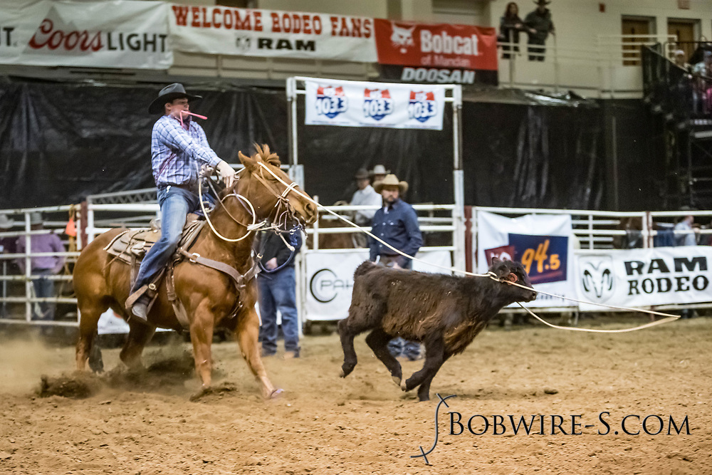 Trey Young competes in tie-down roping at the Bismarck Rodeo on Friday, Feb. 2, 2018. He had a no time on his run.