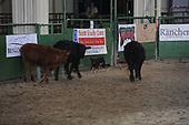 Ranch Class Finals