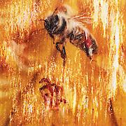Lost Pollinators