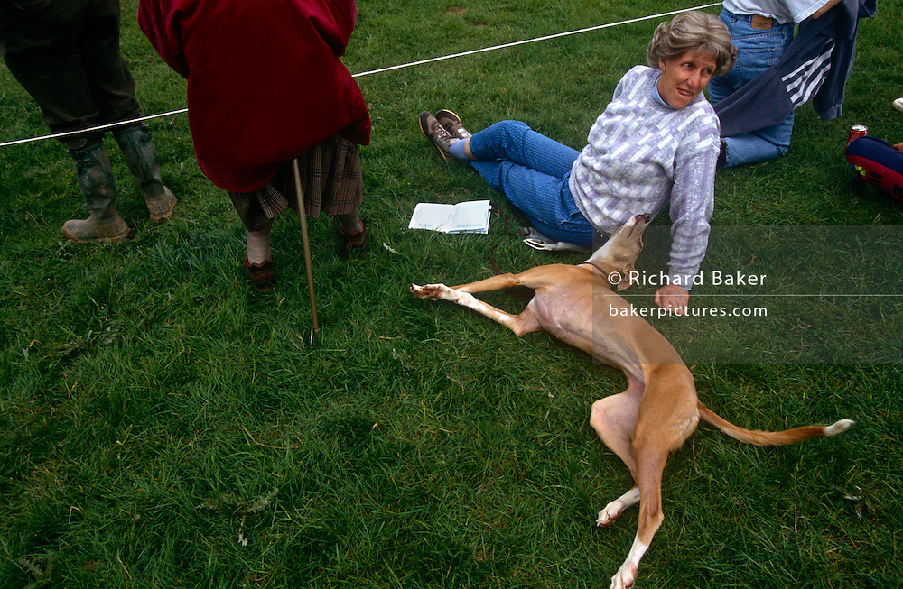 A spectator at the Royal Windsor horse trials, sita on the grass with her pet whippet dog, between competitors as they gallop across country in this west London space near Windsor Castle. The dog stretches out with tail wagging, its owners sat with an open competition listing. Alongside, an elderly lady rests on a shooting seat. Whippets in the UK are a medium-size dog averaging in weight from 15 to 30 lb (6.8-14 kg), with height (under the FCI standard) of 18.5 - 20 inches (47 - 51 cm) for males and 17.5-18.5 inches (44-47 cm) for females. Whippets are generally quiet and gentle dogs, and may be content to spend much of the day resting. After a chance to run about and let off steam, they are happy to become couch-potatoes. They are loyal and friendly. Because of this, whippets are known to have been used in aged care facilities.