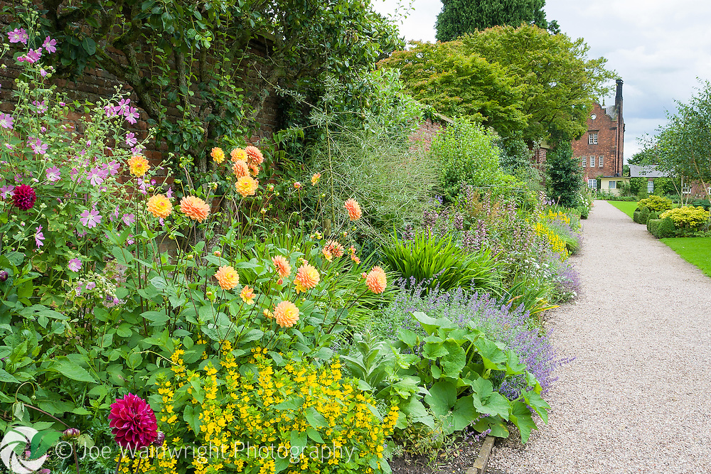 Dahlias, mallow, catmint and yellow loosestrife are among the many plants in this summer border at Capesthorne Hall, Cheshire.