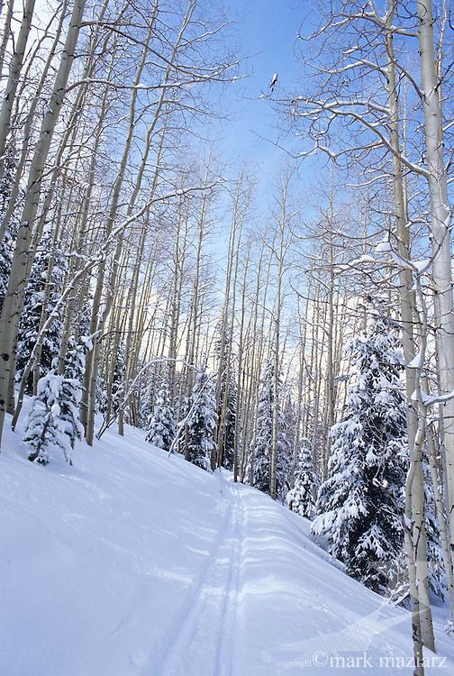 trail through woods at Park City Mountain Resort, Park City UT USA