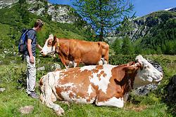 THEMENBILD - Deutsche Wanderin stirbt nach Kuh-Attacke, Landwirt muss mehr als 180.000 Euro bezahlen. Mit massiven finanziellen Folgen hat ein Bauer zu kämpfen, dessen Kuhherde eine deutsche Hundehalterin zu Tode getrampelt hat. Ein Gericht in Österreich sorgte mit seinem Urteil für Aufsehen. Die 45 Jahre alte Hundehalterin aus Rheinland-Pfalz war im Sommer 2014 im Tiroler Stubaital von der Kuhherde, die offenbar die Kälber vor dem Hund schützen wollte, zu Tode getrampelt worden. Die Frau hatte laut Gericht die Hundeleine mit einem Karabiner um die Hüfte fixiert. Bild Aufgenommen am 10.08.2008 // German wanderer dies after cow attack, farmer must pay more than 180,000 euros. With massive financial consequences has a farmer to fight, whose cow herd has trampled a German dog owner to death. A court in Austria caused a stir with his judgment. The 45-year-old dog owner from Rheinland-Pfalz was trampled to death in summer 2014 in the Tyrolean Stubai Valley by the herd of cattle, who apparently wanted to protect the calves from the dog. The woman had loud court the dog leash with a carabiner around the waist fixed. Picture taken on 10.08.2008. EXPA Pictures © 2019, PhotoCredit: EXPA/ Johann Groder