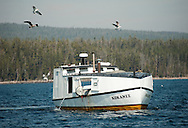 PRICE CHAMBERS / NEWS&amp;GUIDE<br /> A contract fishing boat trawls across Yellowstone Lake with gill nets, as the effort to eliminate lake trout continues.