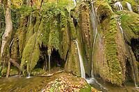 Waterfalls and abundant mosses (Cratoneuron commutatum, Bryum ventricosum) growing on the Labudovac barrier, Upper Lakes, Plitvice National Park, Croatia