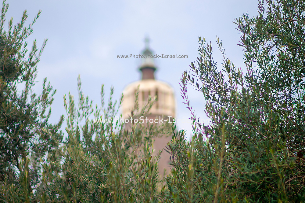 Selective focus of the cupola of the Basilica of the Annunciation as seen through olive branches, Nazareth, Galilee, Israel