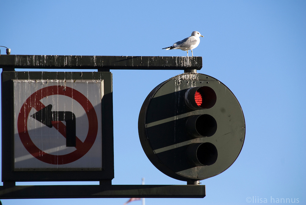 A seagull sits atop a bird dropping encrusted traffic light and sign in San Francisco