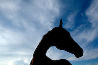 A horse stands in a open field on a ranch in Mequon WI Sep. 7, 2006...Photo by Darren  Hauck