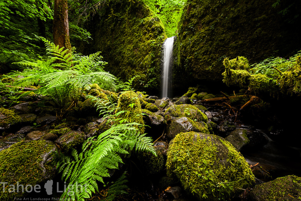 Moss Falls along the Ruckle Creek Trail in the Columbia Gorge area of Oregon.