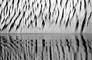 Deutschland, DEU, Stuttgart, 2000: Die Struktur eines nassen Eisbärfells (Ursus maritimus) spiegelt sich im Wasser, Tierpark Wilhelma.   Germany, DEU, Stuttgart, 2000: Polar bear, Ursus maritimus, structure of wet fur, reflecting in the water, Tierpark Wilhelma, Stuttgart.  