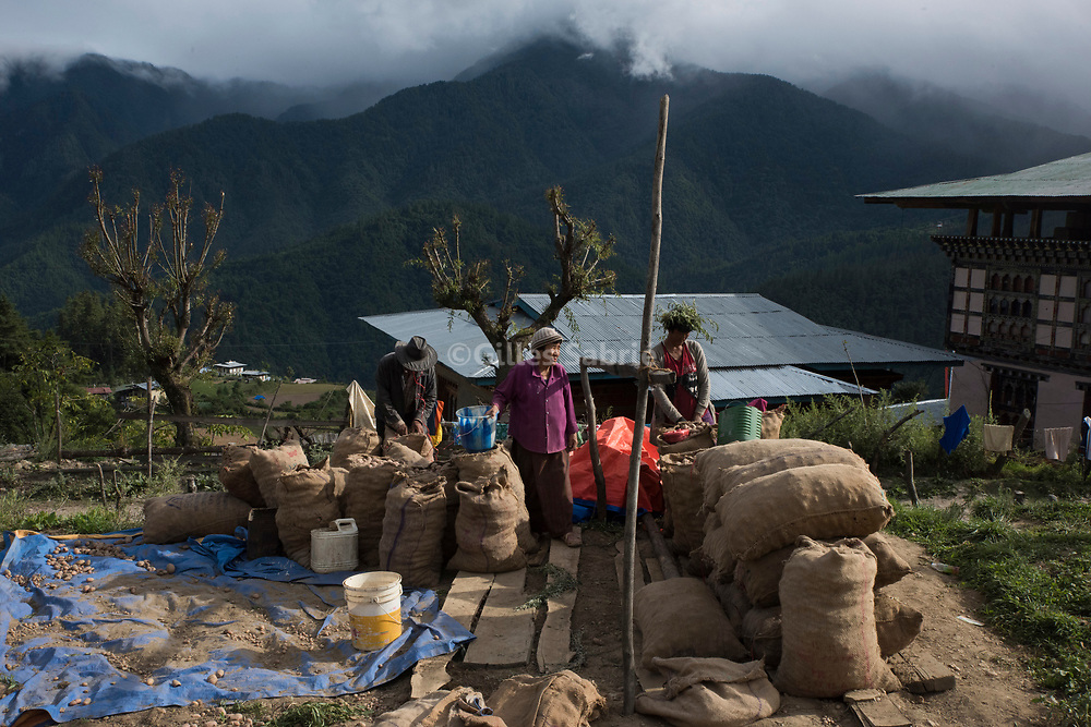 For a story by Steven Lee Myers, Bhutan<br /> Nagu, Bhutan, August 2nd, 2017<br /> Farmers gathering the yearly potato harvest. Most Bhutanese potato production is exported to India,<br /> Gilles Sabri&eacute; pour The New York Times