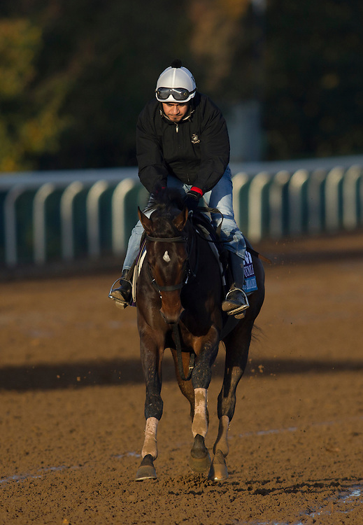 October 29, 2015: Cocked and Loaded, trained by Larry Rivelli and owned by Richard Ravin & Patricia's Hope, LLC (Vince Foglia), exercises in preparation for the Sentient Jet Breeders' Cup Juvenile at Keeneland Race Track in Lexington, Kentucky. Alex Evers/ESW/CSM
